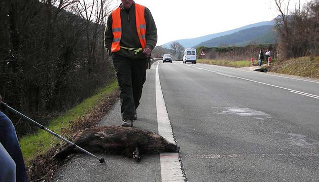 El Gobierno de Navarra da carpetazo a su responsabilidad por atropellos a jabalíes