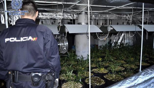 Cae una banda serbia que pirateaba luz para cultivar droga en invernaderos