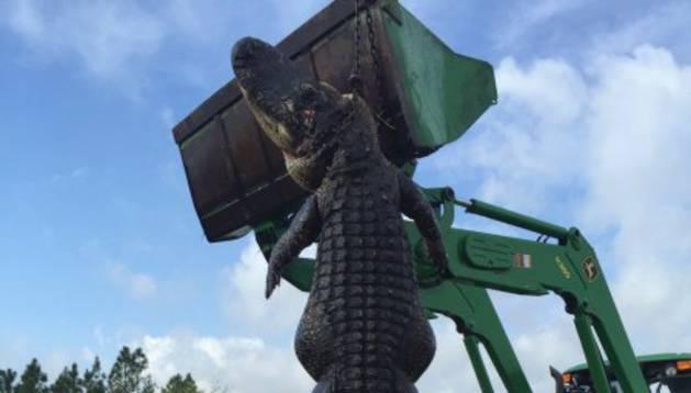Un niño de 9 años posa junto al caimán de casi cinco metros de longitud.