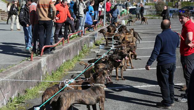 Perros de presa reunidos en Santesteban
