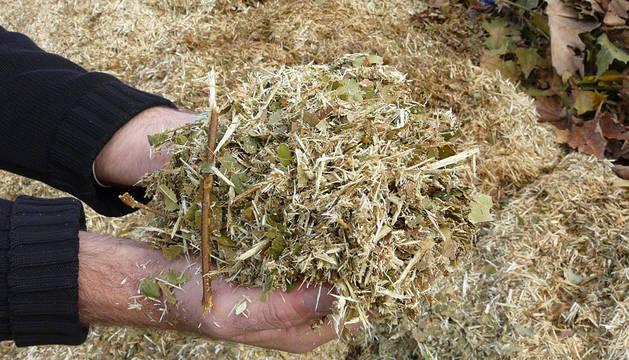 Una persona recoje restos de una poda para compostaje.