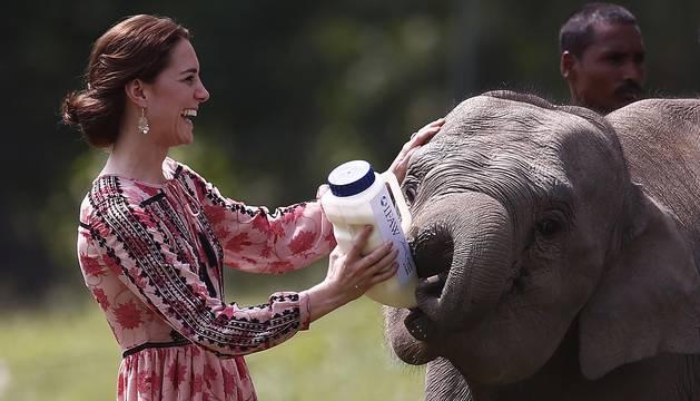 El príncipe Guillermo de Inglaterra y su esposa Catherine, visitan el Centro de Rehabilitación de Vida Silvestre y Conservación (CWRC) en el bosque de la reserva Panbari en Kaziranga, en el nordeste de la India