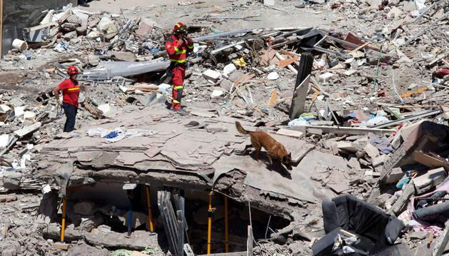 Miembros de la Unidad Militar de Emergencias UME, pasan un perro en busca de personas que puedieran quedan bajo los escombros.