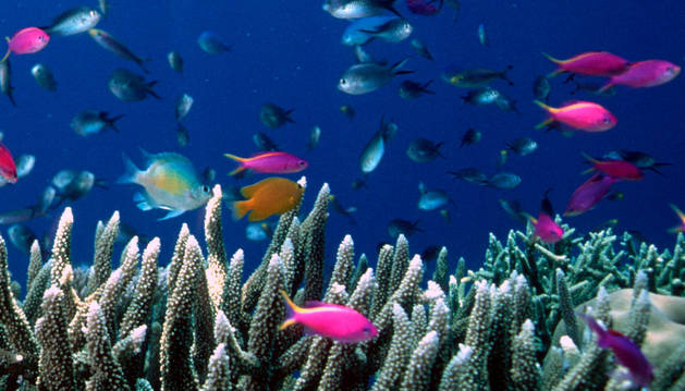 Gran Barrera de Coral de Australia.