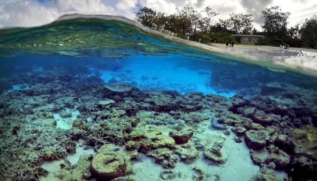Región de la Gran Barrera de Coral de los Parques Queenlsand y Wildlife Service (Australia)