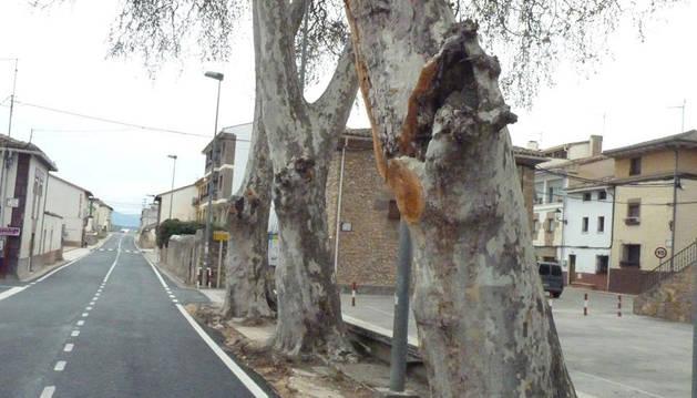 Obras Públicas 'recorta' uno de los plataneros de la travesía de Murieta
