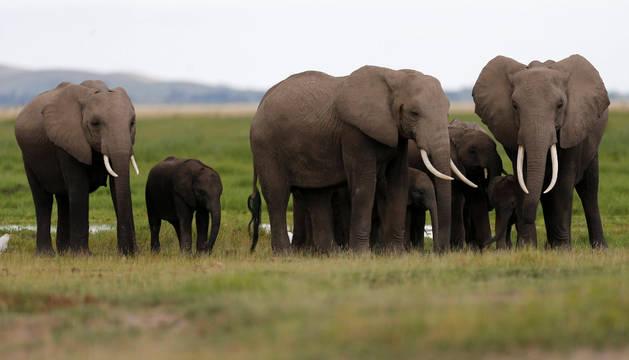 Elefantes en el Parque Nacional de Amboseli en Kenia