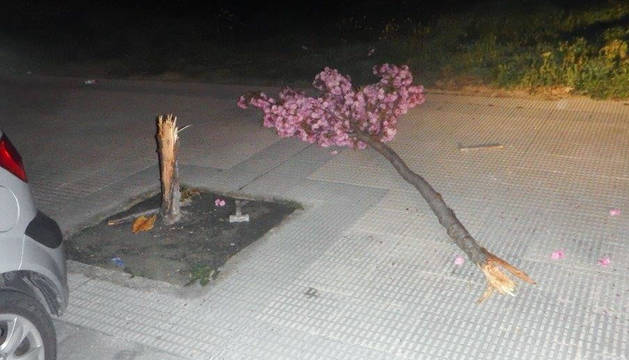 Imagen del árbol cortado en la calle Santos Ochandategui.