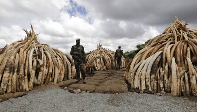 Varios agentes patrullan junto a algunas de las incautaciones en el Parque Nacional de Nairobi.