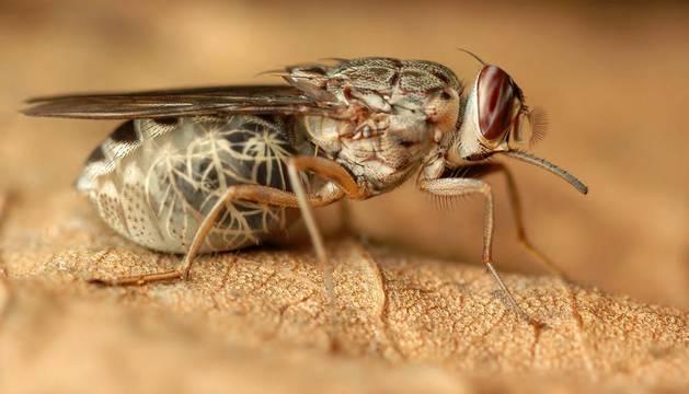 Drones españoles contra la mosca tsetsé en Etiopía