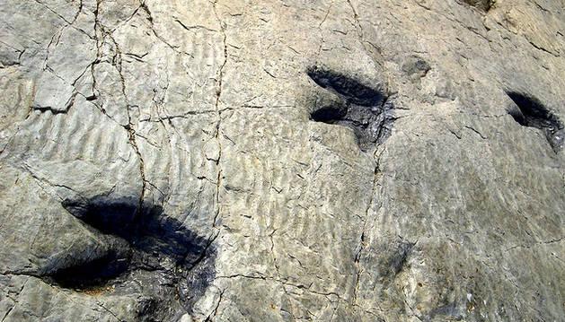Hallan una huella fosilizada de reptil de 230 millones de años de antigüedad