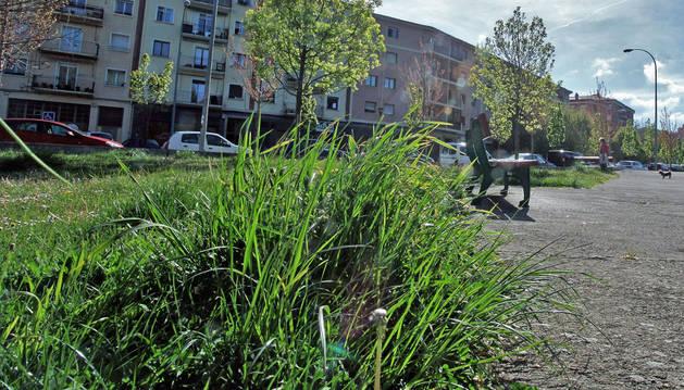 Aspecto de las zonas verdes en la calle Río Arga, en el barrio de la Rochapea.