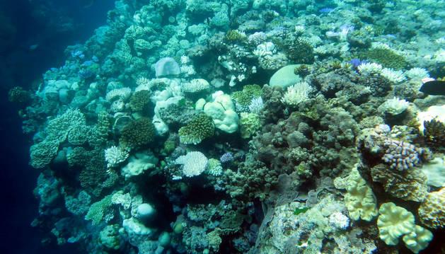 Una imagen de un arrecifre de coral.
