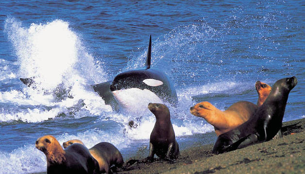 La campaña de la ONG persigue dar a conocer el problema de la sobreexplotación de los océanos.