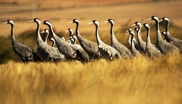 Desciende la población de más del 40% de las aves migratorias