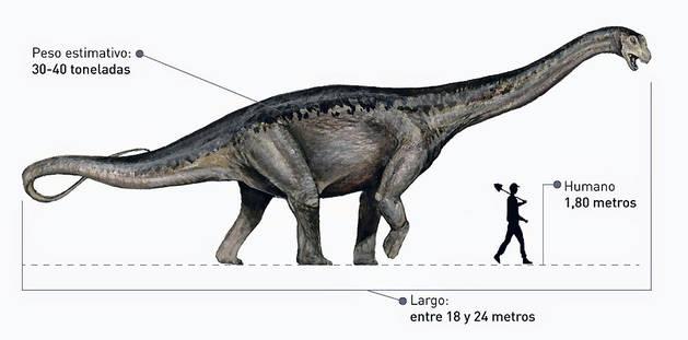 El dibujo muestra las dimensiones de un Titanosaurio.