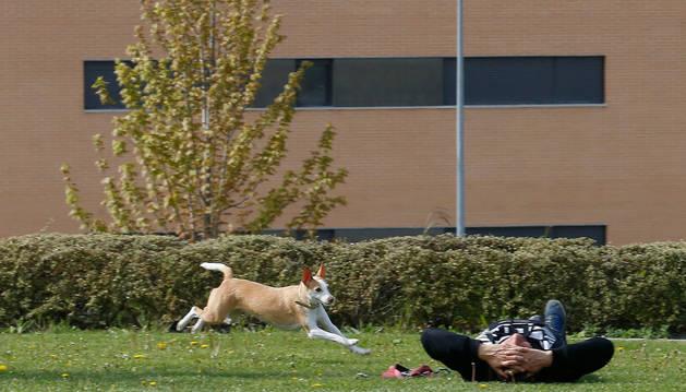 Un perro corriendo suelto cerca de su dueño, que descansa sobre una zona de hierba.