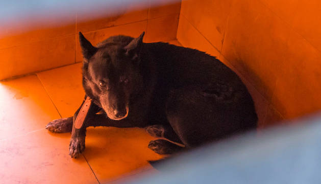 Muere un hombre de 70 años atacado por su perro en Murcia
