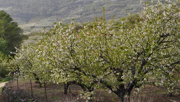 Una niña de 12 años muere en una excursión escolar en el Valle del Jerte