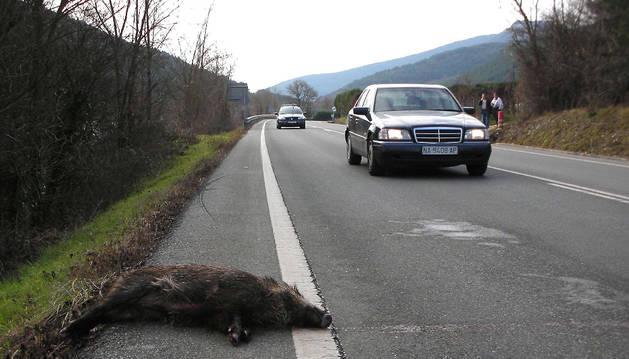 Un jabalí atropellado en una carretera navarra.