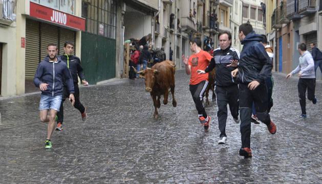 Varios mozos corren delante de una de las vacas del encierrillo, en la plaza Santiago, bajo la lluvia.