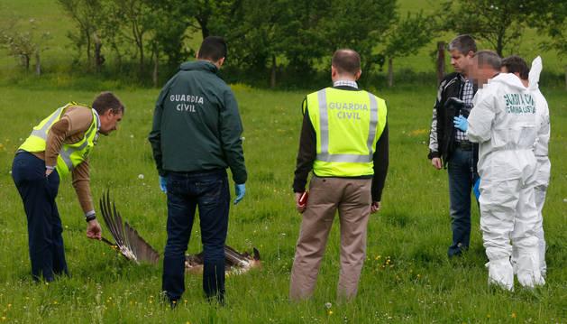 Agentes de la Guardia Civil y el juez de guardia Fermín Otamendi observan los restos del buitre que colisionó con la avioneta sobre el cielo de Arbizu.