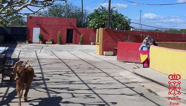 Capea de Marcilla suspendida por no cumplir los requisitos exigidos por la normativa para su celebración.