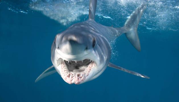 Muere una buceadora al ser atacada por un tiburón en Australia