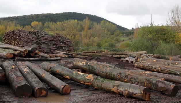 El Plan Forestal de Navarra busca desarrollar una industria forestal competitiva