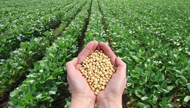 La polivalenciade los agrónomos