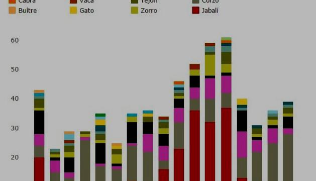 Animales atropellados en las carreteras navarras desde 2015