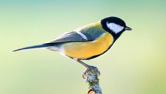 Las aves dejan de comer cuando hay exceso de ruido