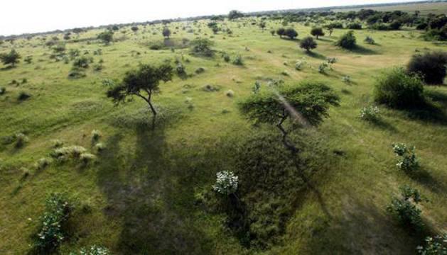 Vista aérea de la pradera que se extiende a lo largo de la orilla del Lago Chad.