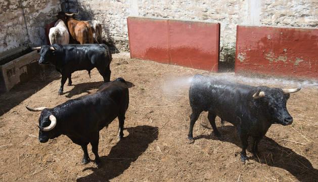 Los toros de Miura, Las Monjas y Dolores Aguirre, en los corrales de Tudela