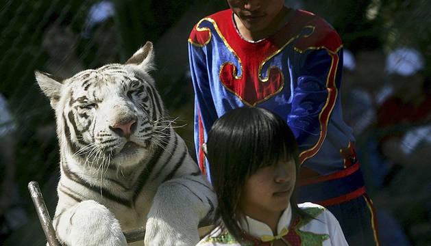 Una de las actividades del parque Badaling Safari World.