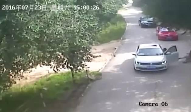 Ataque mortal de un tigre en un parque safari de China