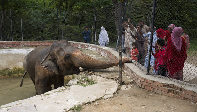 La depresión del elefante Kaavan, cuestión de Estado en Pakistán