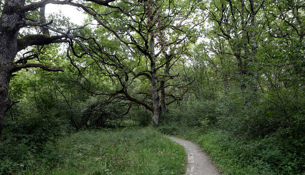 Bosque de Orgi.