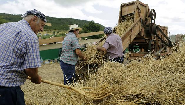 Los trilladores arrojan la paja segada a la cinta de la trilladora en Salinas de Ibargoiti.