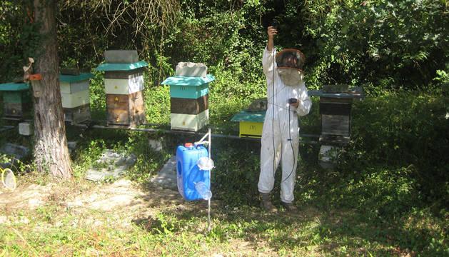 Apicultores de Bera combaten a la avispa asiática.