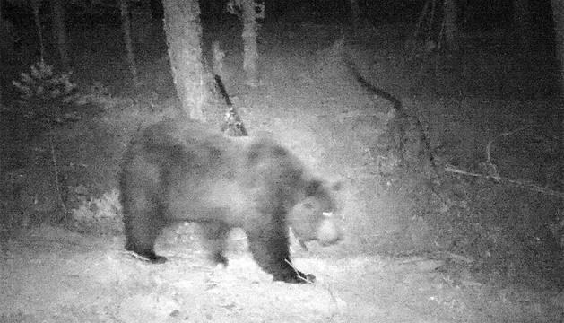 Imagen del oso.