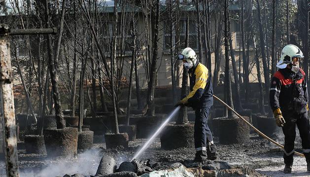 Dos bomberos apagan los rescoldos que quedaban en el vivero Villa Miranda, junto a las plantas grandes calcinadas por el incendio.