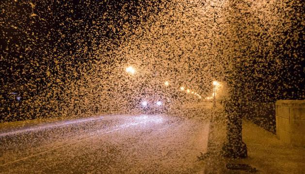 Miles de mariposas 'invaden' el puente del Ebro estas noches dificultando incluso la circulación de los vehículos.