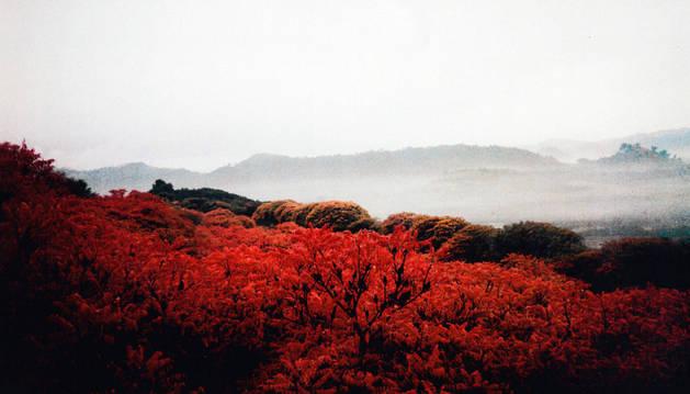 Imagen que recoge el esplendor de este arbusto en octubre, cuando luce un rojizo intenso.