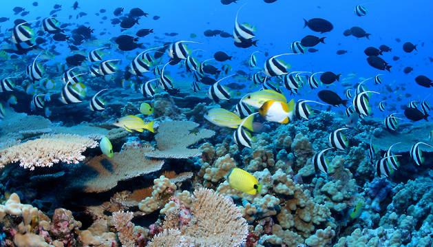 EEUU crea la mayor área marina protegida del mundo en Hawai