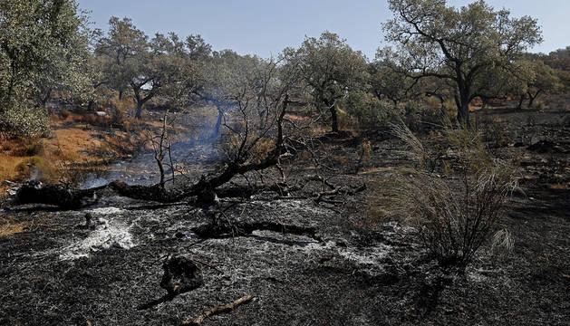Zona afectada por el incendio que se declaró en  el término municipal de El Castillo de las Guardas (Sevilla).