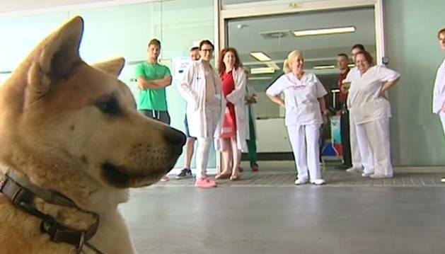 'Maya', a las puertas del hospital de Elda (Alicante).