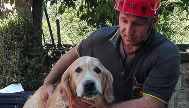 Romeo, el perro rescatado de los escombros de una casa hundida.