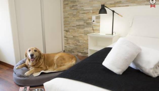 Un perro en un hotel de Valencia.