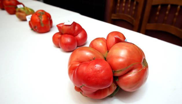 El tomate feo de Tudela, una de las variedades que se podrán degustar en la Feria.